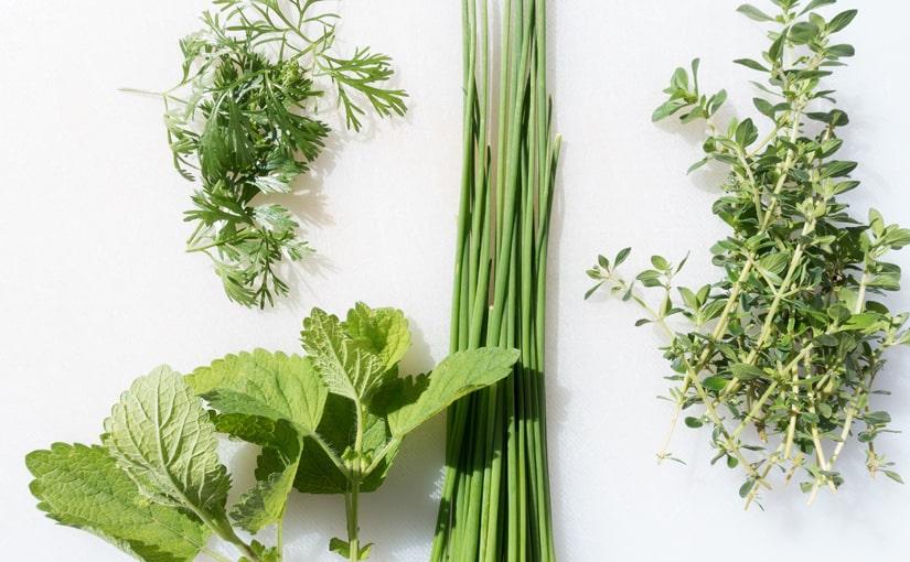 Zioła – rośliny lecznicze