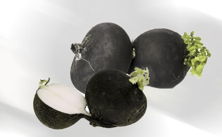 Czarna rzodkiew