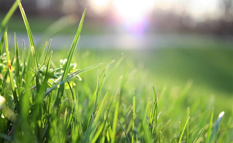 Pozwólmy kosiarkom odpocząć, czyli o zaletach rzadszego koszenia trawy